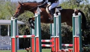 Sold Horses
